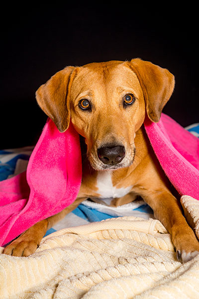 RGB 2014 Towel Drive to benefit our local Humane Society Naples